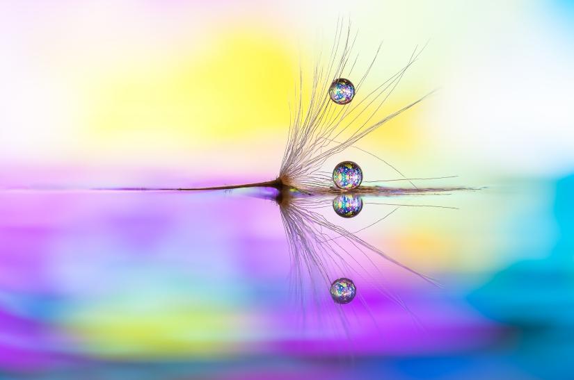 True colors - Drops e Flowers Gocce e Fiori Riflessi by Mario JR Nicorelli con Nikon D300s Macro fotografia - Macro Photography - Macro Foto