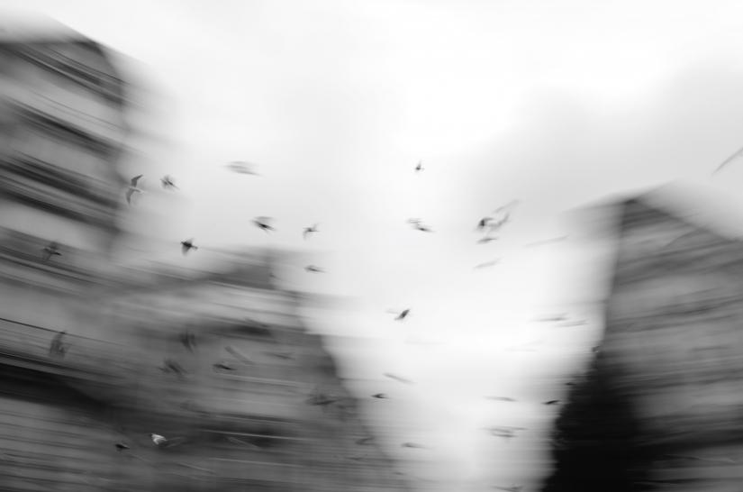 Uccelli, Hausmann.