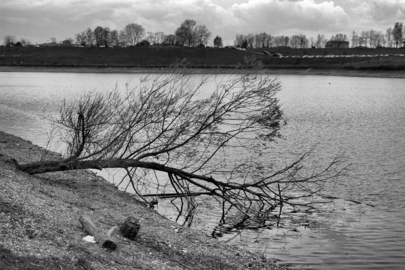 Un albero morto