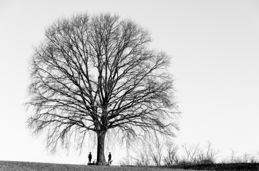 Un albero per tre