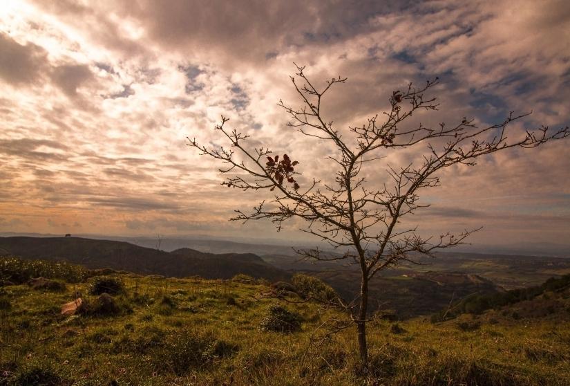 Un albero spoglio