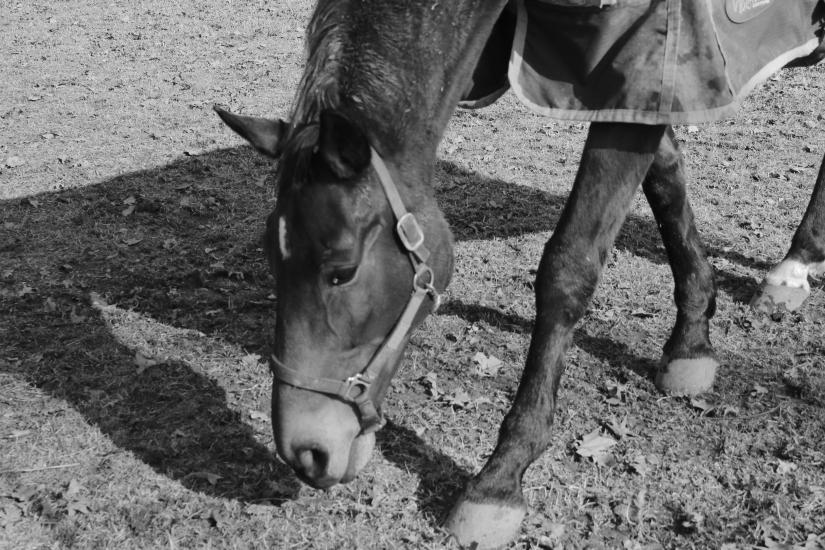 Un cavallo e la sua ombra