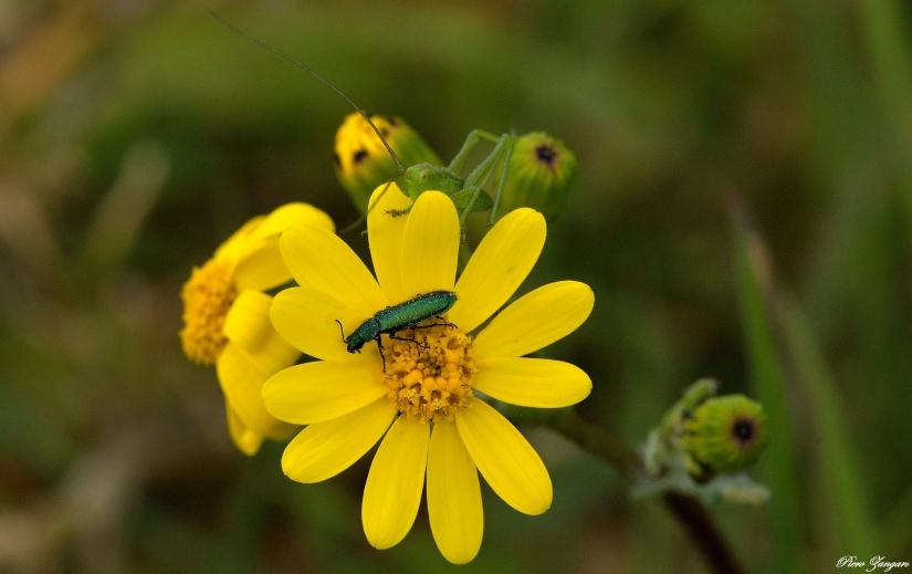 Un fiore molto ambito