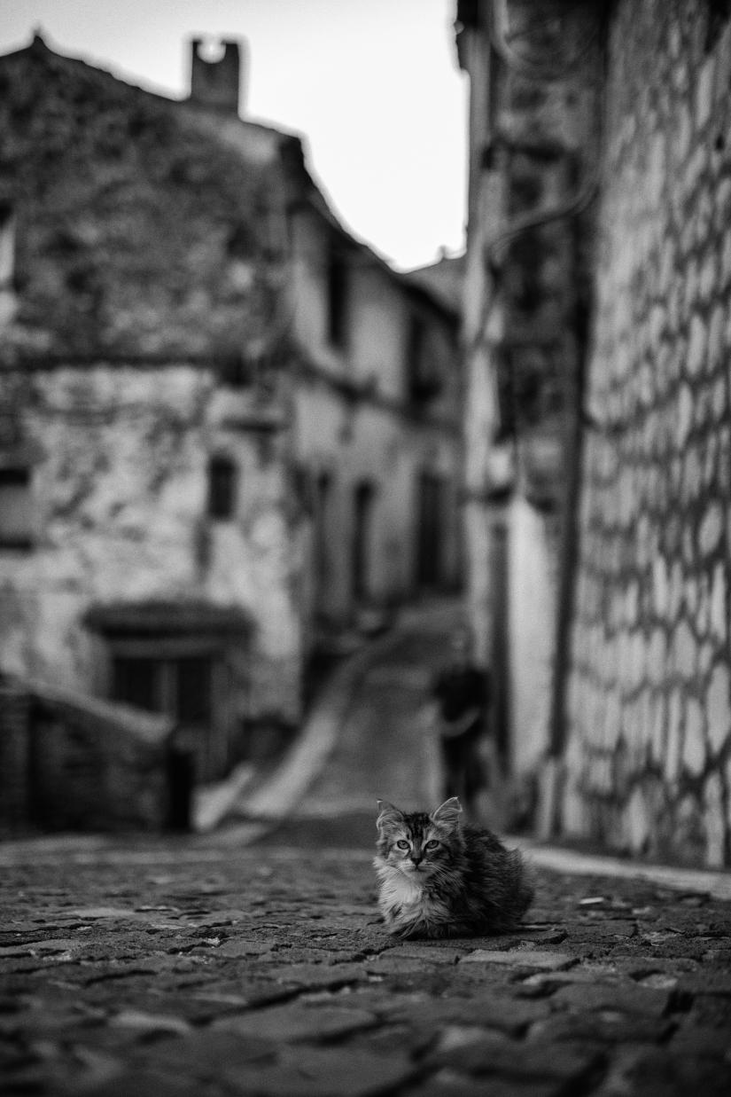 Un gatto al borgo