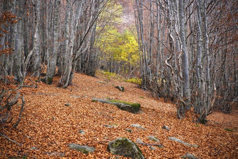 Un manto di foglie