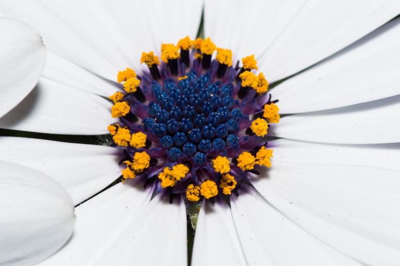 Un mix di macro fiori