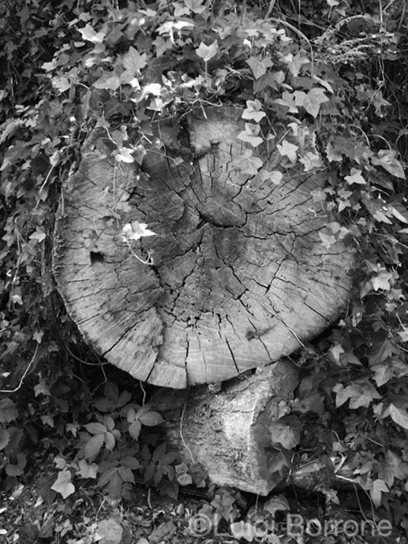 Un taglio all'equinozio di  autunno