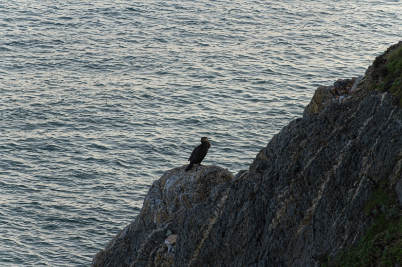 Un uccello in mezzo al mare