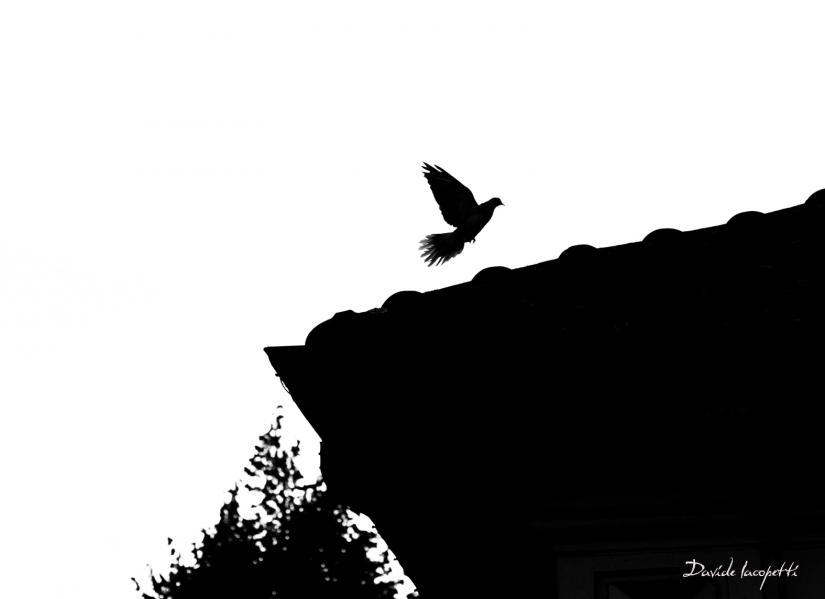 Un volo verso l'infinito