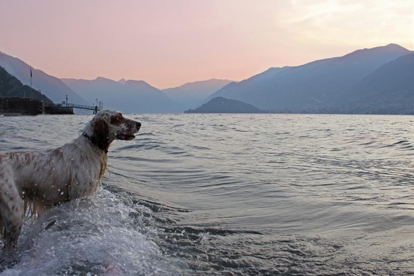 Una bella nuotata