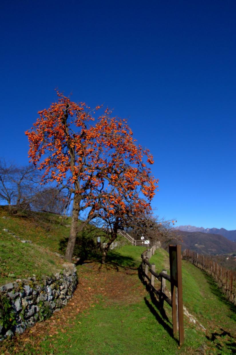 Una bellissima giornata a Montevecchia