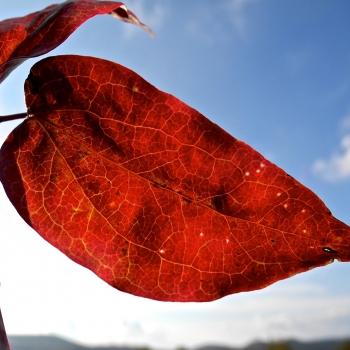 Una foglia d'autunno in controluce