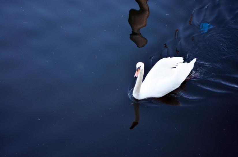 Una passeggiata al lago