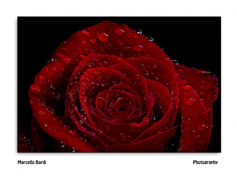 Una rosa per te ...