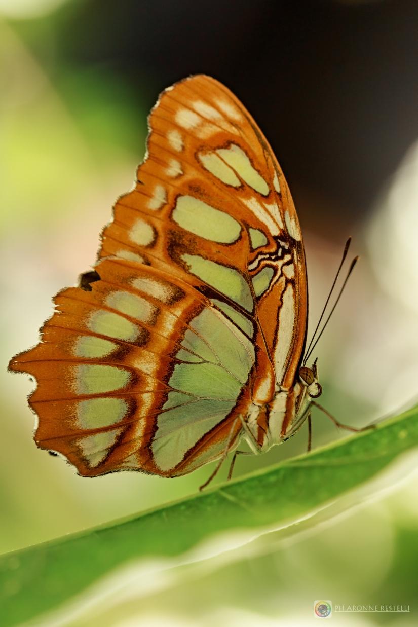 Un'altra farfalla...