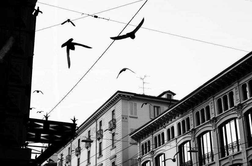 Urban fly