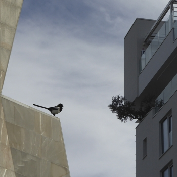 Vita dura per gli uccelli in città