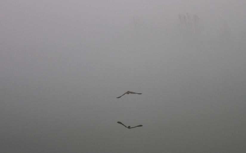 Volo tra la nebbia