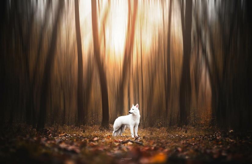 White Wolf Autunn