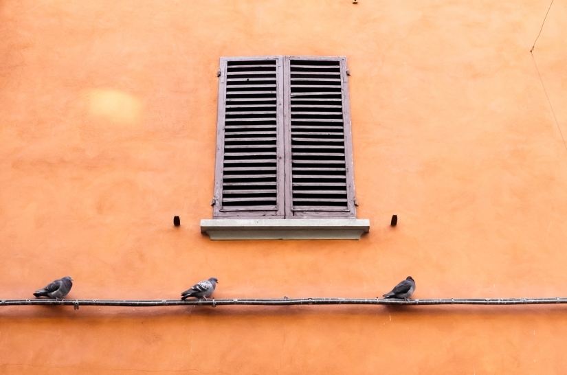 Window and pigeons