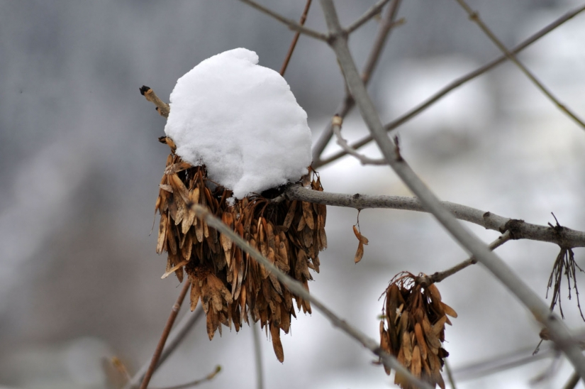 Winter macro