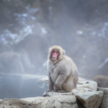 Yigokudani Monkey Park - Nagano