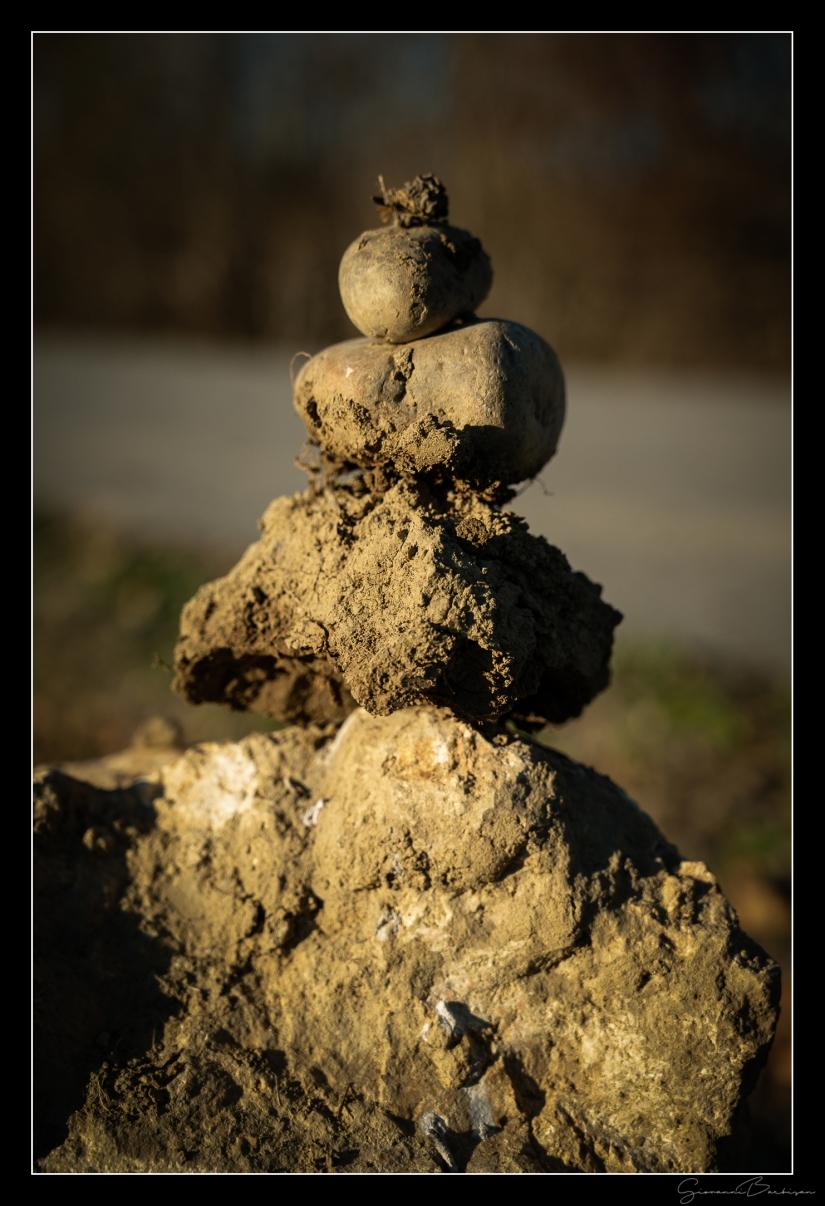 Zen in natura